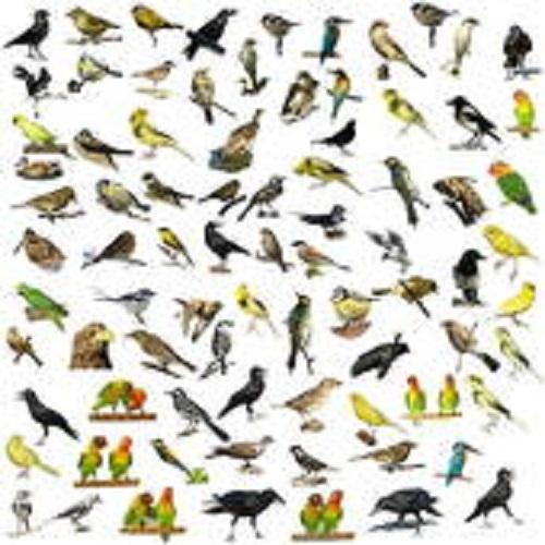Product picture Ornithology
